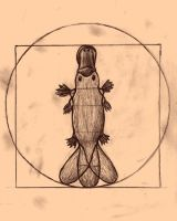 The Vitruvian Platypus by WeaselsHaveLasers