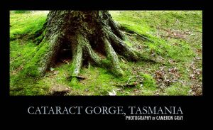 Tree- Cateract Gorge, Tasmania by parablev