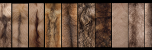 Pelt Line-up by Lupen202