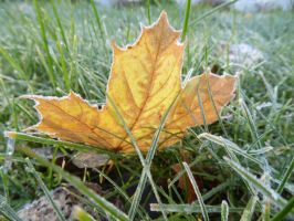 Yellow Leaf Frost VII by TabiKittie