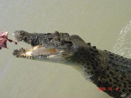 Stock: Crocodile 1 by long-danzi