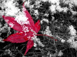 Leaf in the snow by musicismylife2010