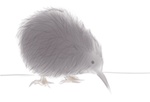 Weird Kiwi Bird by jheisms