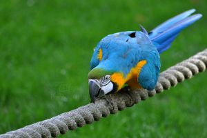 Monorail Macaw by Tienna