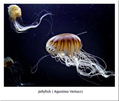 Jellyfish by agov