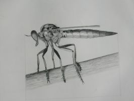 insect study by MirtKlaar
