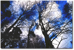 Sky forest. by CelticCari