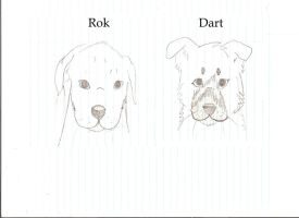 Rok and Dart puppies WIP by xDeadpuffx