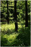 forest life 10 by wildtea