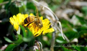 Bee Busy by Annushkka