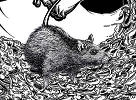 Spray Poster Detail Rat by jopelines