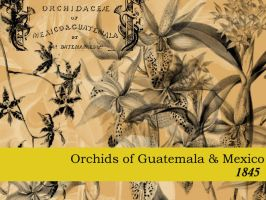Orchids of Central America by remittancegirl