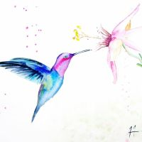 Humming bird on the fly by SteveHeggenAquarelle