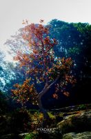 Magical Tree by YadavThyagaraj