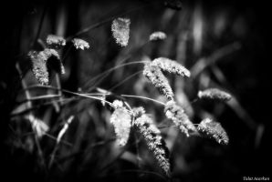 WILD FLOWERS OF THE AUTUMN 1 by mecengineer