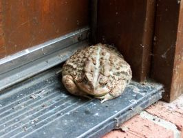 Toad by Tuftless