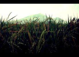 RiceFields by emceenick