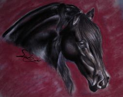Drawing of a friesian1001 by Sabyo92