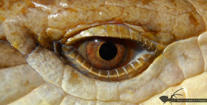 ReptiEye by cdp103188