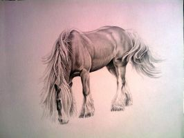 Gypsy Vanner by johnnydraws