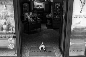 WELCOME TO L'OCCITANE by xACook