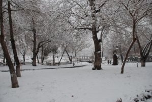 snow trees stock no 4 by chirkhef-stock