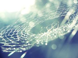 Bokeh Spider Web by Klawdeaa