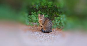 Cat in my garden by JorjasLife