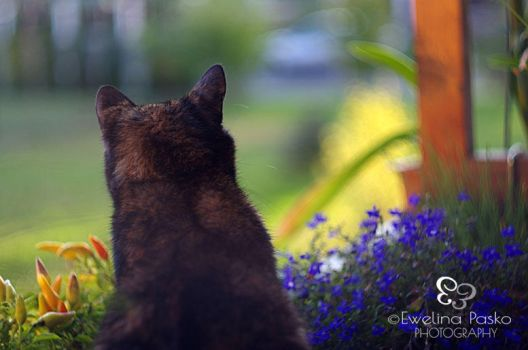 Cat's Curiosity by efeline