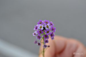 Macro Flower by AndreyFully