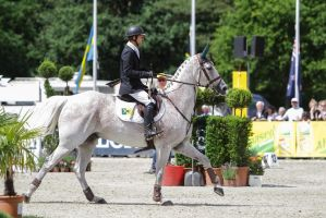 3DE Show Jumping Phase Stock 106 - Towards Jump by LuDa-Stock