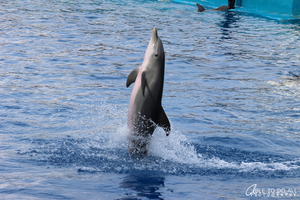 Animals : Dolphin by Abletodoall