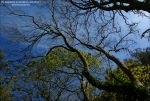 Tangled Up Trees by Hitomii