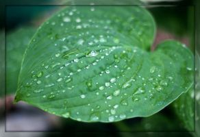 catching the raindrops IV by miss-gardener