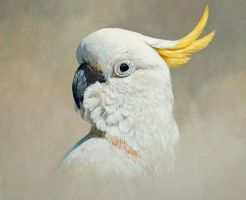 SULPHER CRESTED COCKATOO Oil on Panel 13 by 11 inc by chandlerwildlifeart