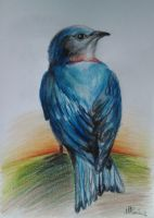blue bird by Ican1000