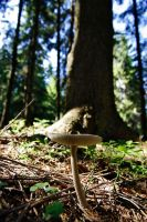 Mushrooms by kulfoniasty