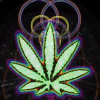 weed by cl502