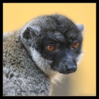 Lemur by Globaludodesign