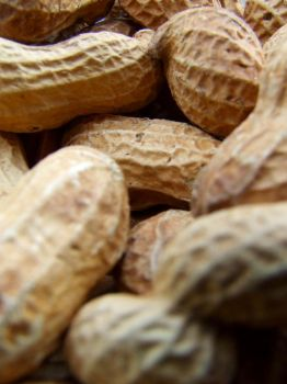 Peanuts by PhilipCapet