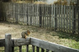 Squirrel by lordofthestrings86