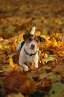 Autumn dog by nunataki
