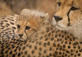 Nestled with Mum by MorkelErasmus
