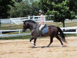 Cantering Ozzy by WistfulDesigns