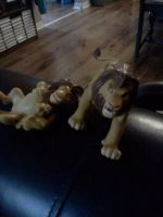 Mufasa and Simbas that my mom found for me! by Heatherannpt