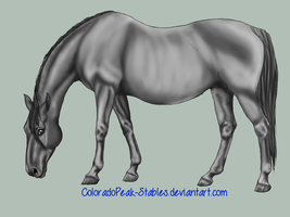 Pregnant Mare Greyscale by Moved-Account