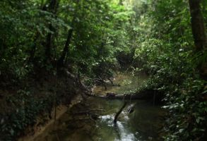 Borneo Jungle stream by postaldude66