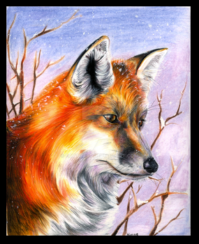 red fox by EatToast