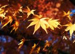 tree autumn colors by Nexu4