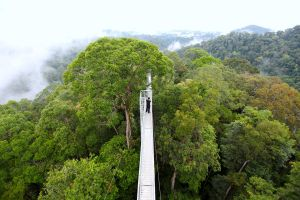 high above the forest canopy.. by jeffzz111